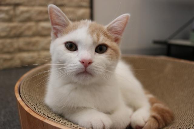 猫の毎日の食事には総合栄養食のキャットフードをあげよう!