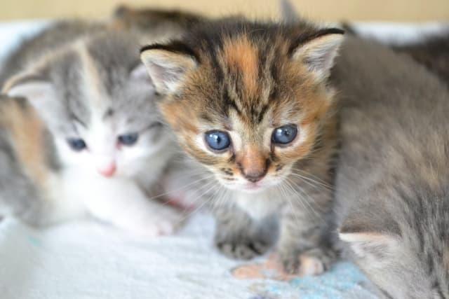 毎日の食事で猫に必要な栄養バランスを知ることは大事!