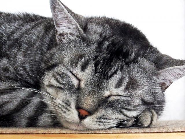猫が大好きな冬の暖かいホットスポットはどこ?