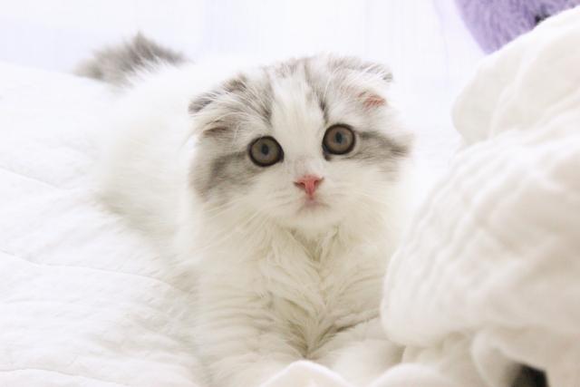 あなたの可愛い愛猫に幸せをもたらすキャットフードの選び方