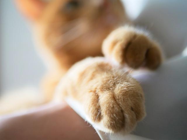猫がグーパーする理由とその意味とは?モミモミの秘密も!