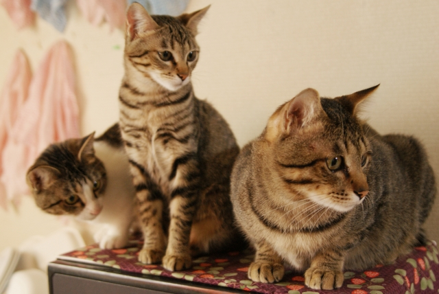 猫の好きな香りと苦手な香りは?猫の嗅覚について
